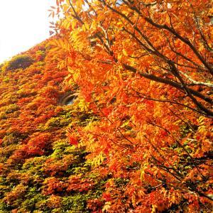 北海道冬&コロナ事情⇒今朝も積雪☃!?昨日11/9は道内感染最高の200人!?ますます心配