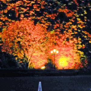 続々編~夜も素敵?☆サッポロファクトリーのレンガ館ツタ壁ライトUPされた風景に癒やされて・・・♪
