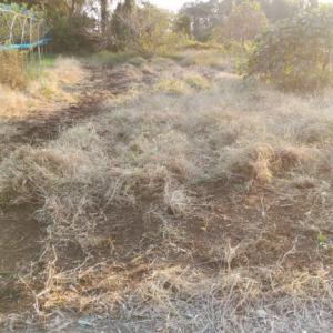 家庭菜園の草刈りを効率的に行うテクニック