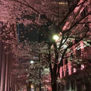 盆略手前のテストと桜咲く。