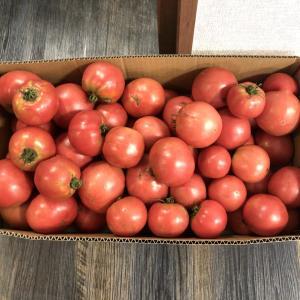 お客様からトマトいただきました!