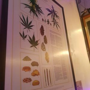 タイの大麻事情