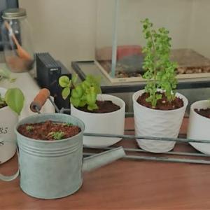 観葉植物とウツの私。