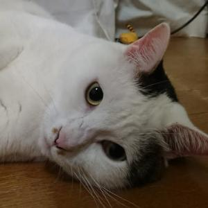 わたしのこと、猫のこと。