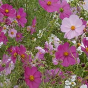 『花の季節』Ⅰ