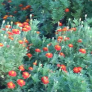 『花の季節』Ⅱ