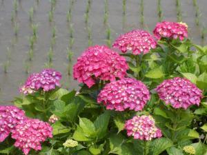 『花の季節』Ⅲ