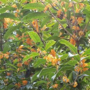 秋の花 秋の空