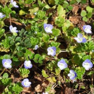 子供に伝えたい!道端や庭に生えている草花の豆知識(初春)