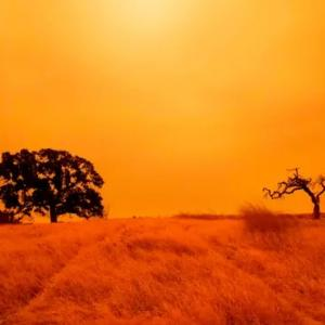 ★California's dark, orange sky is the most unnerving sight I've ever woken up to