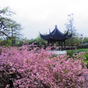 【レポート】池田市「水月公園」子供からお年寄りまで楽しめる景観が美しい公園