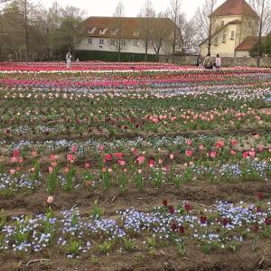 「滋賀農業公園ブルーメの丘」は花畑や動物たちに囲まれて一日遊べる癒やしスポット