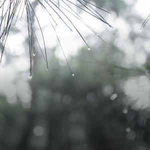 梅雨入りが早いと梅雨明けは早い? 2018年の関東はどうだった?