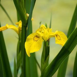 梅雨の季節に見頃になる雨の日に見たいお花3選