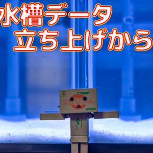 水槽データ!立ち上げ14日目~21日目!!