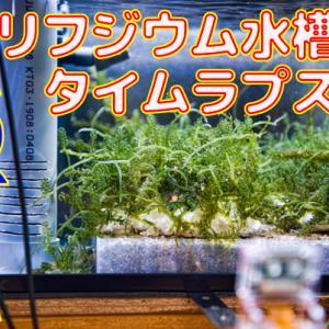 リフジウム水槽のタイムラプス動画1日目~15日目