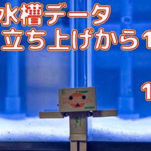 水槽データ!立ち上げ100日目~106日目!!