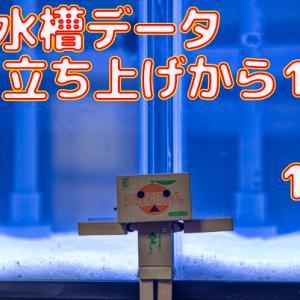 水槽データ!立ち上げ135日目~141日目!!