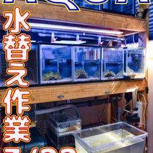 水替え15回目!3/22_立ち上げから183日目!!