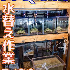 水替え17回目!3/29_立ち上げから190日目!!