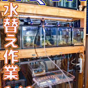 水替え28回目!6/6_立ち上げから259日目!!