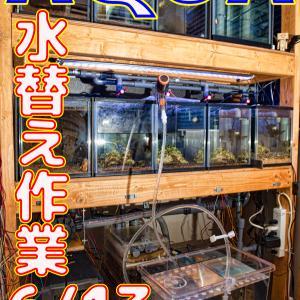 水替え29回目!6/13_立ち上げから266日目!!