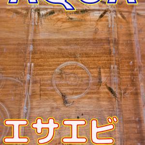 エビの水合わせ_2020/6/21