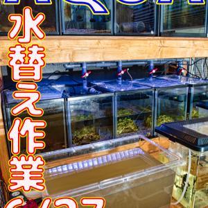 水替え31回目!6/27_立ち上げから280日目!!