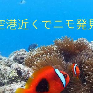 沖縄の綺麗な海を手軽に楽しむ方法!那覇空港近くでもシュノーケルでたくさんの魚たちに会える!