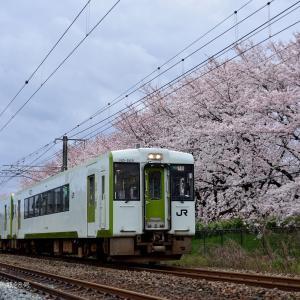 羽越本線 新発田の桜