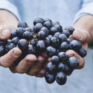 ワイン初心者のための【自然派ワインって?】