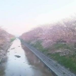 桜🌸@大好きな場所(箸尾)