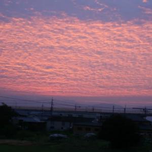ピンク色の朝焼け@自室から
