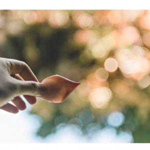 マインドフルネス (瞑想)の効果