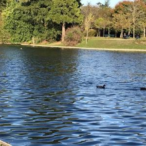 【DJI OSMO POCKET】『凱旋門賞に捧げる』ちょっとゾッとする ブローニュの森の散策(オートゥイユ競馬場〜パリロンシャン競馬場) Walk to Bois de Boulogne