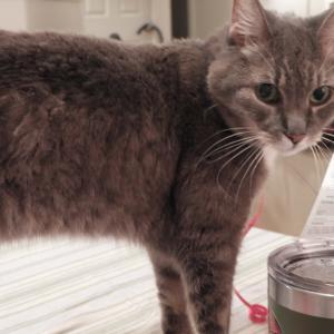 末娘猫は、甲状腺機能亢進症