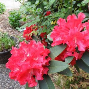 4月27日 今日の庭