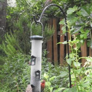 6月16日 今日の庭と昨夜のご飯