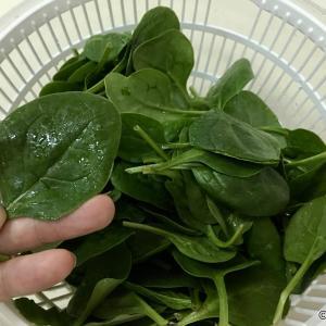 【ベビースピナッチ】サラダ用ほうれん草で簡単に鉄分補給!女性に嬉しい栄養素が豊富
