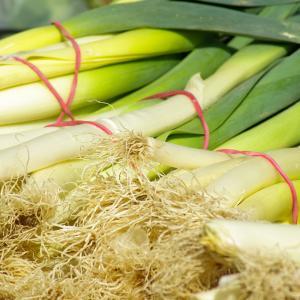 【西洋ネギ・リーキ】甘くて子どもも好む野菜