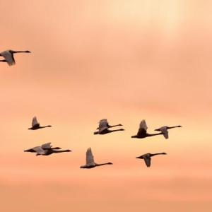 渡り鳥の来る季節になりました
