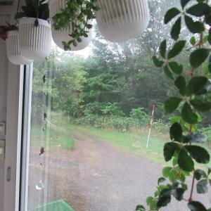 今日は雨・・・