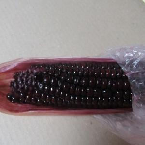紫のトウモロコシ・・・