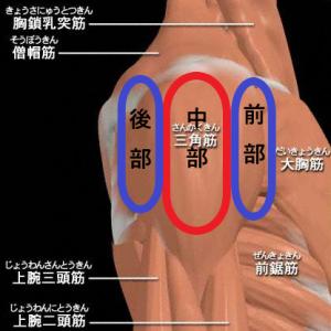 筋トレ三角筋のSIGEが実践メニュー動画でわかりやすく紹介!