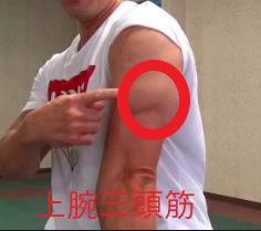 筋トレ上腕三頭筋SIGEの実践メニューと参考動画で紹介!