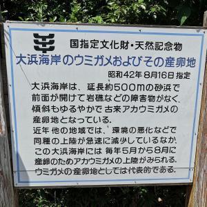 「YouTubeで紹介」ウミガメの海!徳島県海部 大浜海岸散歩!