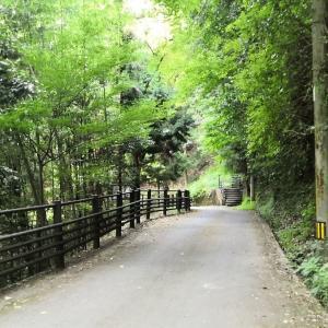 ソロモン伝説がある剣山の近くにある滝!鳴滝と土釜の滝動画で紹介!