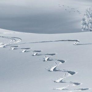 阿波徳島も2月過ぎても雪が降ってます!