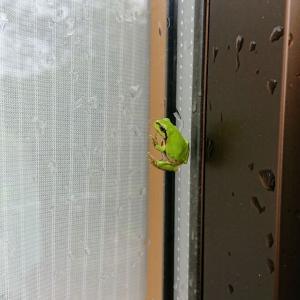 梅雨時の小さなお客様