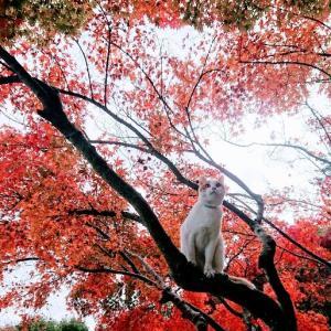 らくちゃん(猫)池にボッチャン